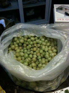 the remaining gooseberries, anyone for crumble tomorrow?